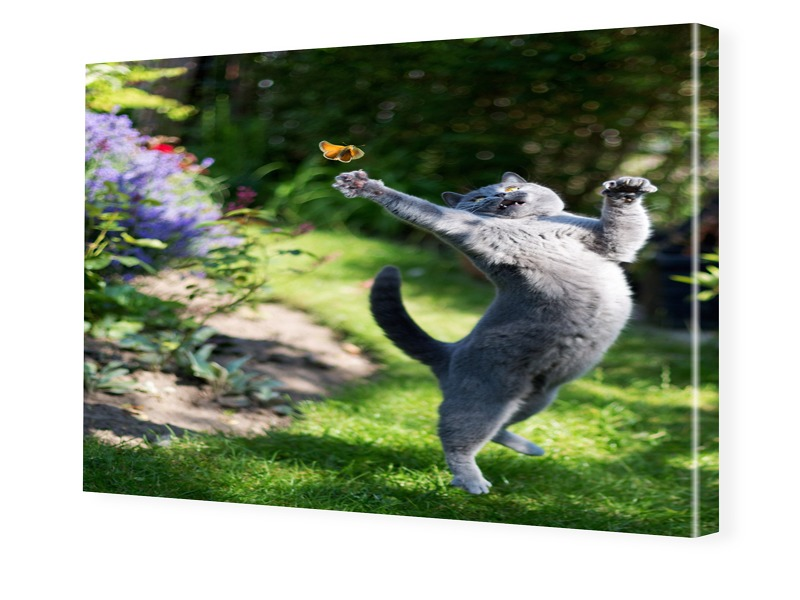 Katzen Bild Foto auf Leinwand im Format 80 x 60 cm