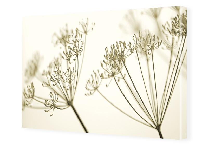 Blütenbild Bilder auf Leinwand im Format 120 x ...