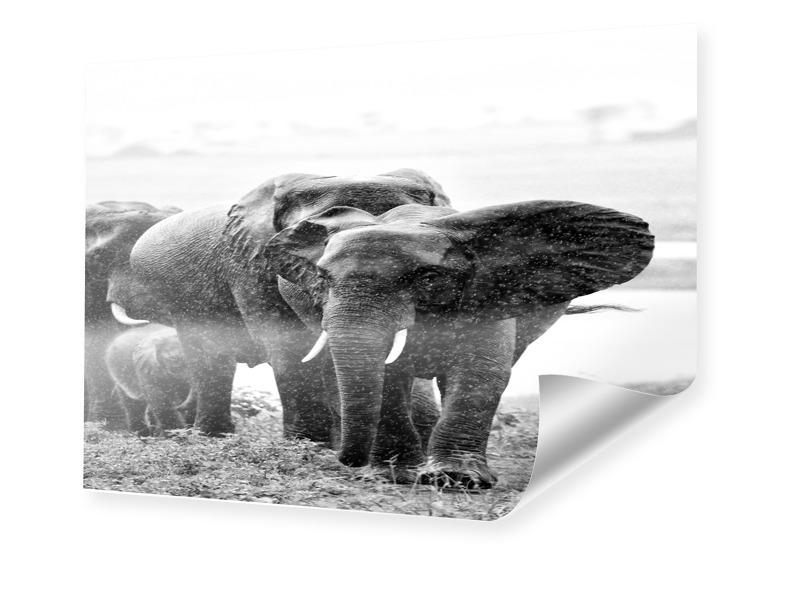 Elephanten Foto Foto im Format 70 x 50 cm