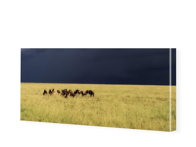 af96b9506c9a828db5d17be5fb0c0601ab9723ea - Photo du Serengeti Impression photo sur toile en panorama en format 120 x 60 cm