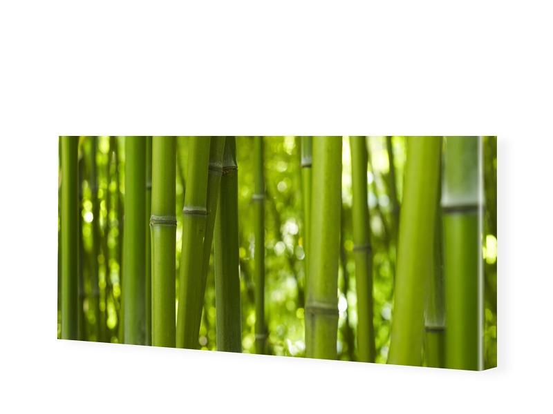 Bambusbilder Leinwanddruck als Panorama im Form...