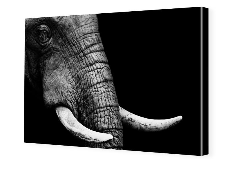 Elefanten-Bild Foto auf Leinwand im Format 80 x...