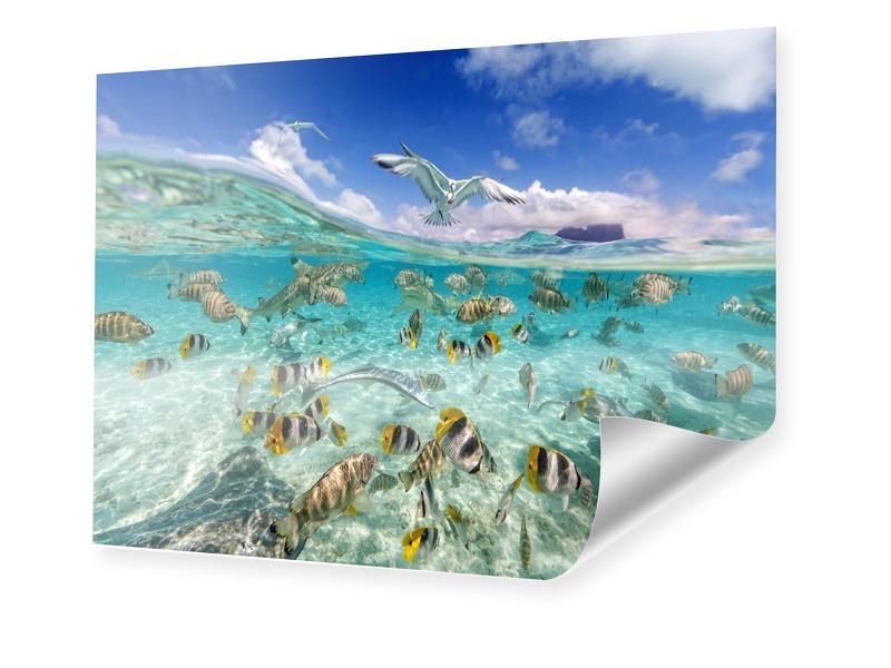 Unterwasser Foto Fotoposter im Format 150 x 100 cm