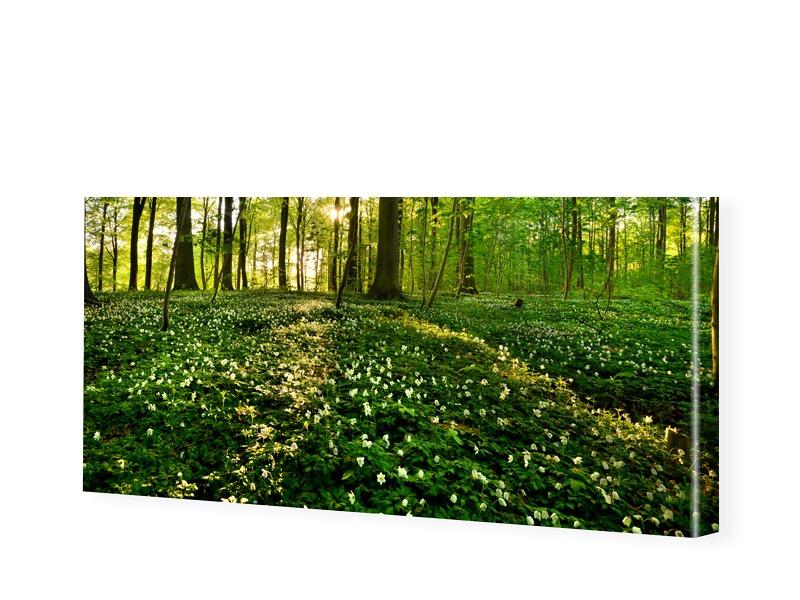 Waldbilder Panorama Leinwand als Panorama im Fo...