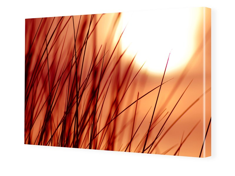 Gras Foto Foto auf Leinwand im Format 80 x 60 cm