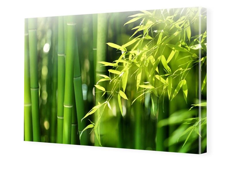 Bambusbild Leinwandfotos im Format 160 x 120 cm