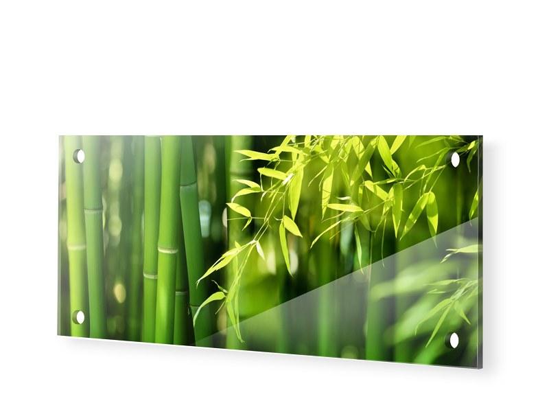 Bambusbild Acrylglas Druck als Panorama im Form...