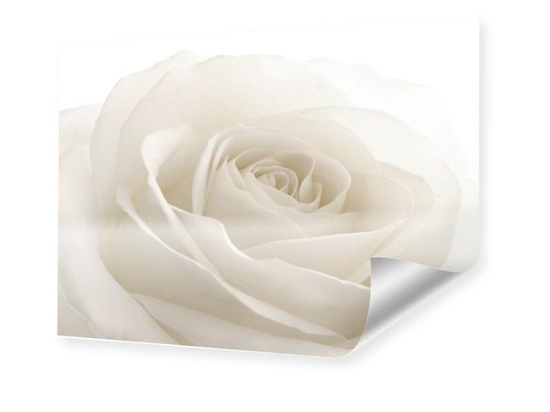 Bild Rose Foto im Format 35 x 28 cm
