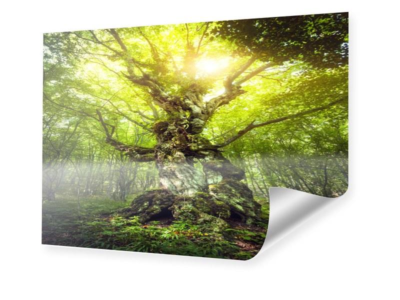 Baum des Lebens Foto im Format 70 x 50 cm