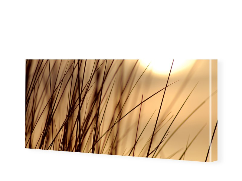 Gras Foto Leinwand Bild als Panorama im Format ...
