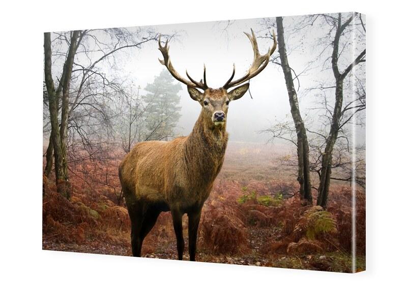 Hirschbilder Foto auf Leinwand im Format 60 x 4...