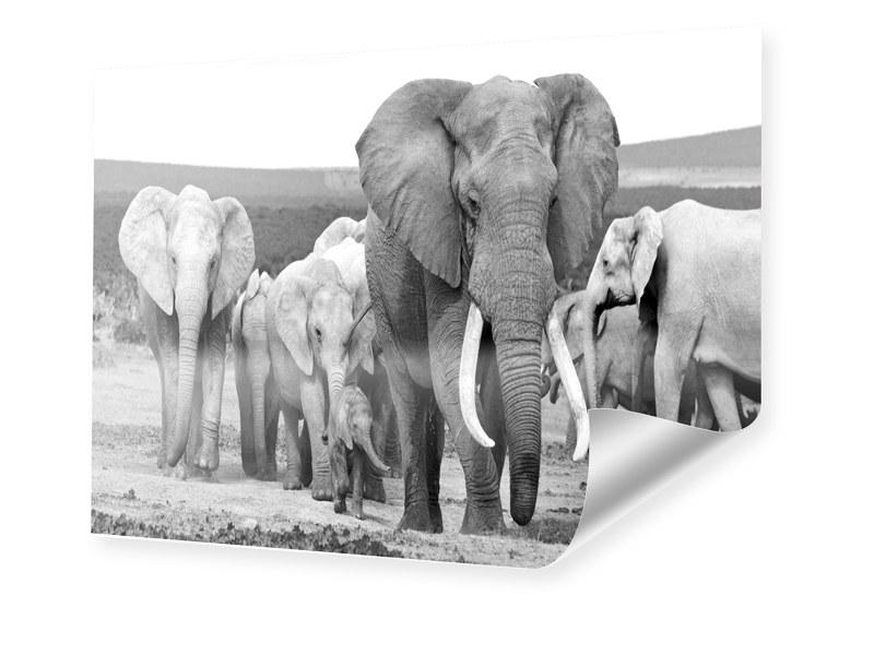 Elefanten Fotos Poster im Format 80 x 60 cm