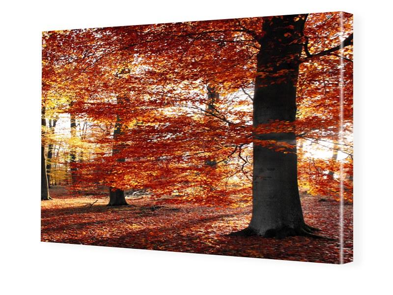 Herbstbild Foto auf Leinwand im Format 80 x 60 cm