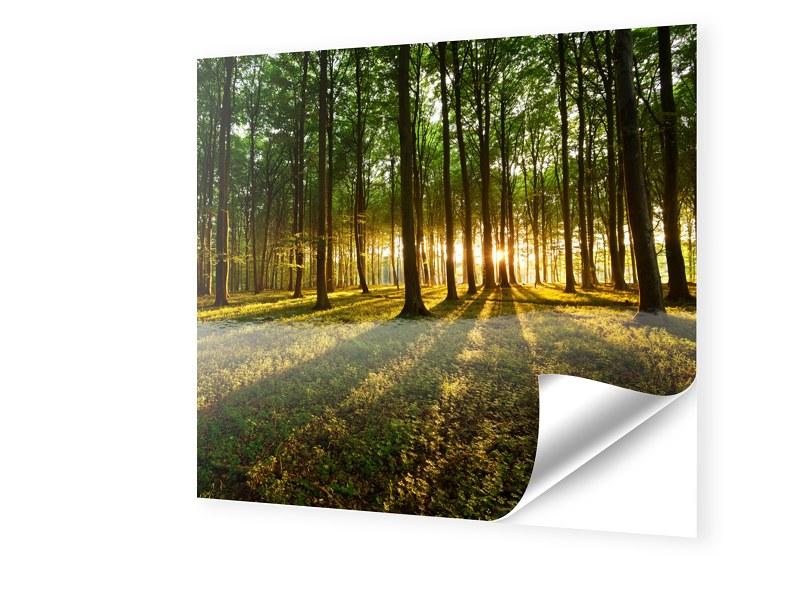 Wald Bild Fensterfolie quadratisch im Format 50...