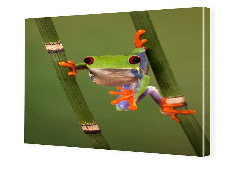 Froschbild Bilder auf Leinwand im Format 150 x ...