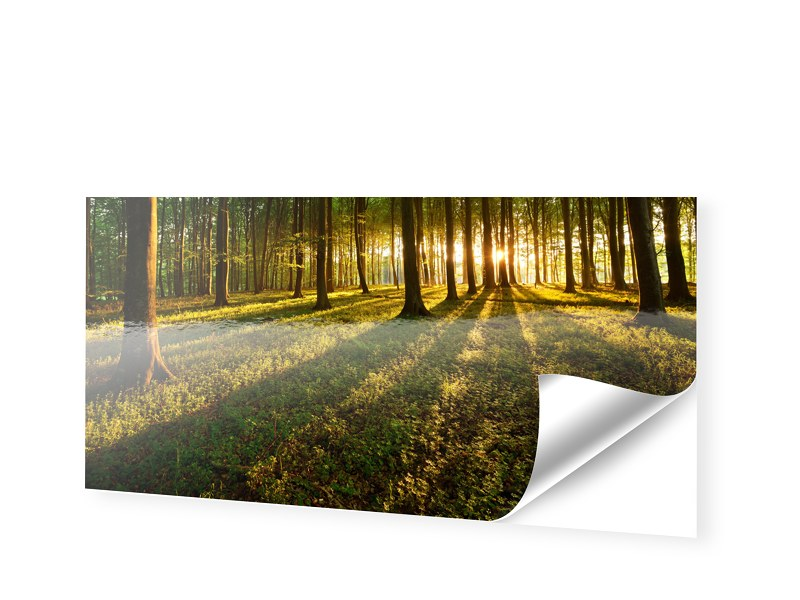 Wald Bild Fotos auf Folie als Panorama im Forma...