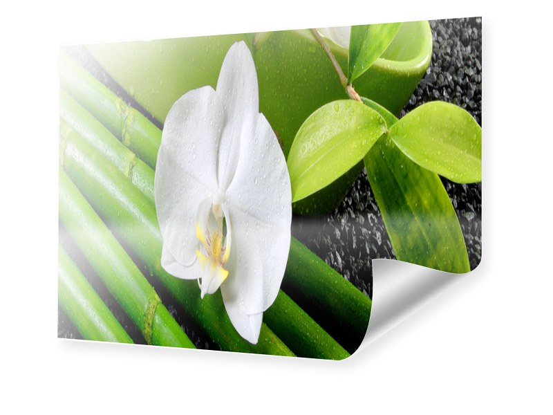 Poster Orchidee Poster im Format 40 x 30 cm