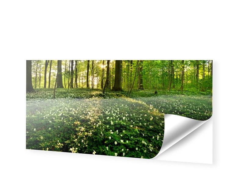 Waldbilder Fotofolie als Panorama im Format 180...