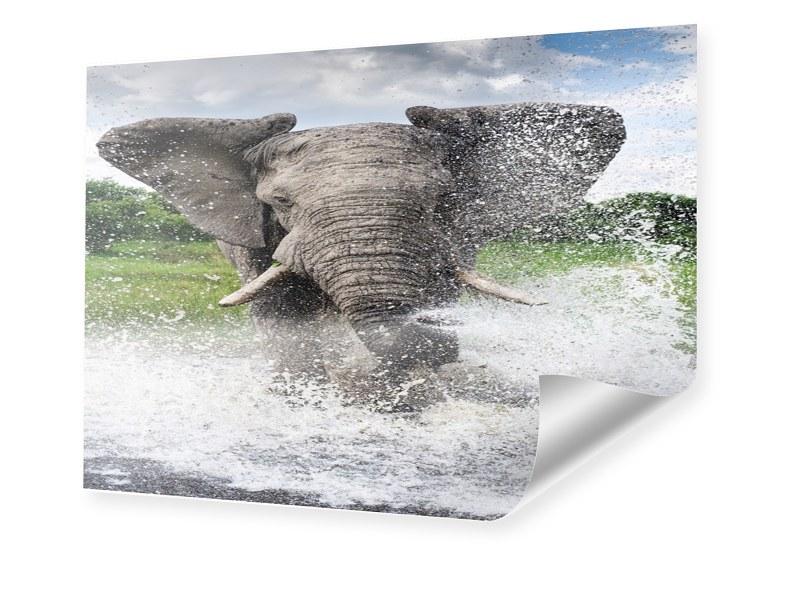 Elefant Foto Poster im Format 60 x 45 cm