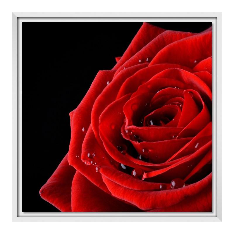 Rose Bild Fotoleinwand im Schattenfugen Rahmen ...