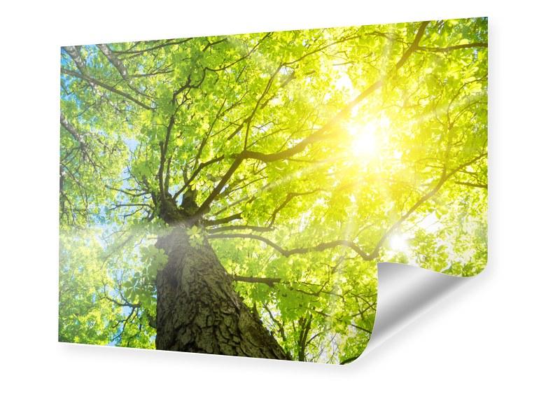 Baum Sonnenstrahlen Foto im Format 24 x 18 cm
