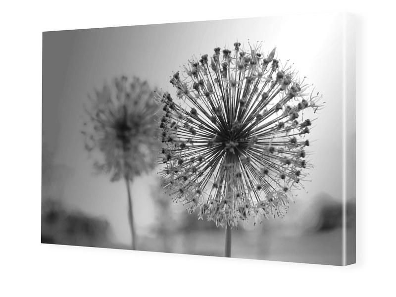 Pusteblume Bilder auf Leinwand im Format 120 x ...