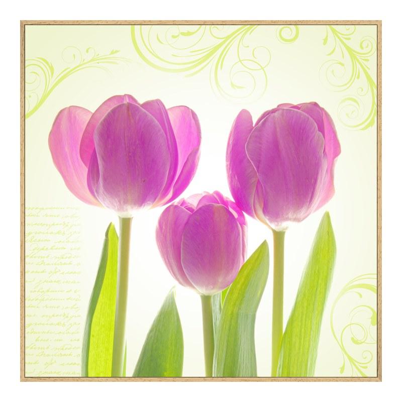 Tulpen Poster Alu Dibond im Artbox Natur im Format 105 x 70 cm | Dekoration > Bilder und Rahmen | myposter