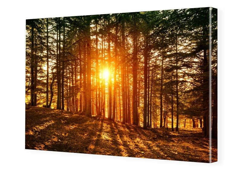 Image of Abendrot im Wald Leinwand drucken im Format 160 x 90 cm