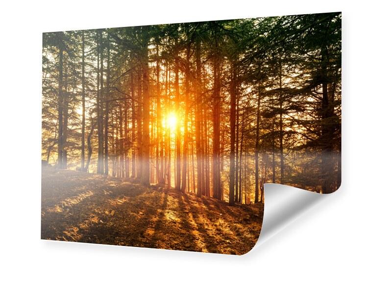 Image of Abendrot im Wald Poster im Format 80 x 60 cm